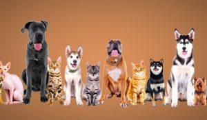 risarcire-risarcimento-danni-servizi-malasanita-veterinaria